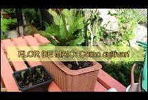 FLOR DE MAIO :