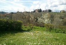 Tuscany lover