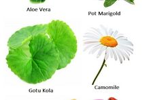 Herbs and how - to's / Herbs and spices - what and how to grow.