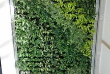 Green & Living Walls