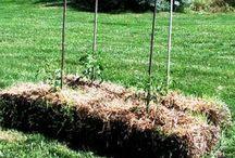 Pea Straw bale growing