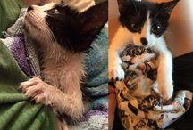 Amazing Pet Stories!
