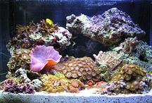 Fish tank / by Chris Hayden