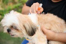 Flea remedies dogs