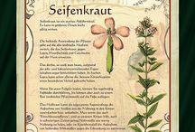 pflanzrnkunde