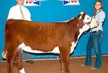 Livestock at the Fair / Farming and Ranching Livestock at the Permian Basin Fair