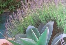 garden / front / plants / by Anna Gardiner