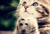 Animals...!