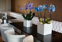 Orchideeën / De meest trendy planten zijn de orchideeën. Er zijn vele mooie soorten verkrijgbaar in diverse vormen en maten.