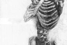 ~ anatomy