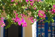 greek Life / #Ελλαδάρα