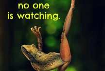 Green frog quotes