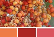 alium colors