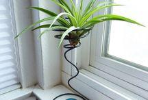 Plants / Airplants