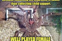 SPIDERS / TARANTULAS / by Twitchy Witchy Studios