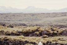 Horses / by Debra Chiappetta