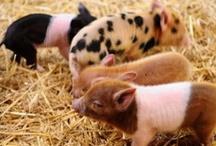 3 little pigs / by Becky Lucas