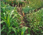 Gardening / by Cliff Avant