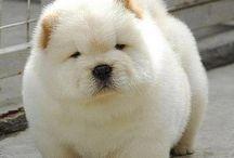 Cute Animals & Lovely Pets / #mascotas adorables :-)