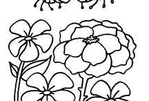 flores da lu