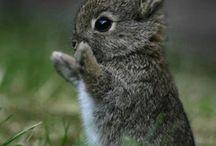 Zvířecí mláďata / Každý dobře víme, že zvířata jsou nejroztomilejší jako mláďata...