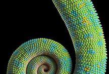 Reptilienarten