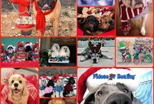 Christmas Dogs / by Fidose of Reality