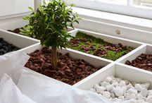 Ciknic - Plants / Moodboard
