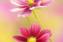 Flores / by Maria Jose Puntel