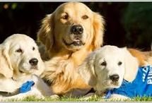 Paradise P.E.T.S. / Pets Educated To Serve - A series about service dogs and their human partners.
