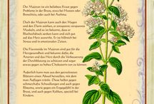 kreüter, und pflanzen