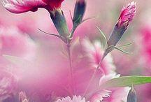 bloemen /vogels/vlinders