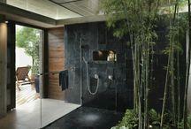 Plants bamboo