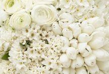 Белые букеты