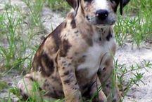 La belleza / #dogs #beauty #life