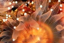 Oceans & Sea life