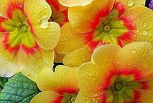 DIV. Blomster