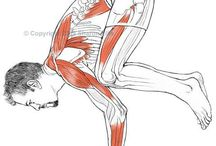 hand drawn: anatomy