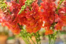 flower beauty / by Debby Bell