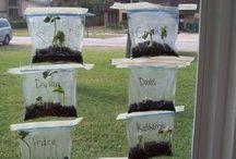 Miljö/ plantering