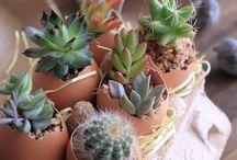植木鉢アイデア