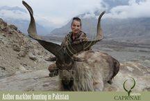 Astor Markhor hunting in Pakistan