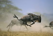 Wildlife Photogrpahy / All about wildlife photography
