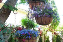 gardens / Macetas colgantes