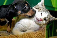 Кого выбрать / Хотите завести себе животное? Здесь я предложу несколько вариантов,возможно вам понравится!