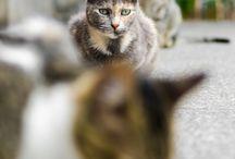 gatos lindos, gatinhos e gatões.... / gatos apaixonam e enternecem os corações, amolece as pessoas....