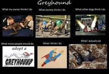 Greyhounds / by Debbie Aden