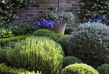 White and silver planting ideas