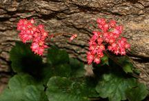 southwestern plants that Amanda likes