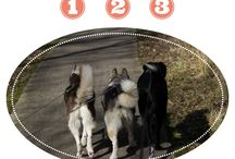 Honden Huishouden Blogs